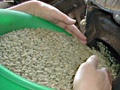 生豆を焙煎機へ